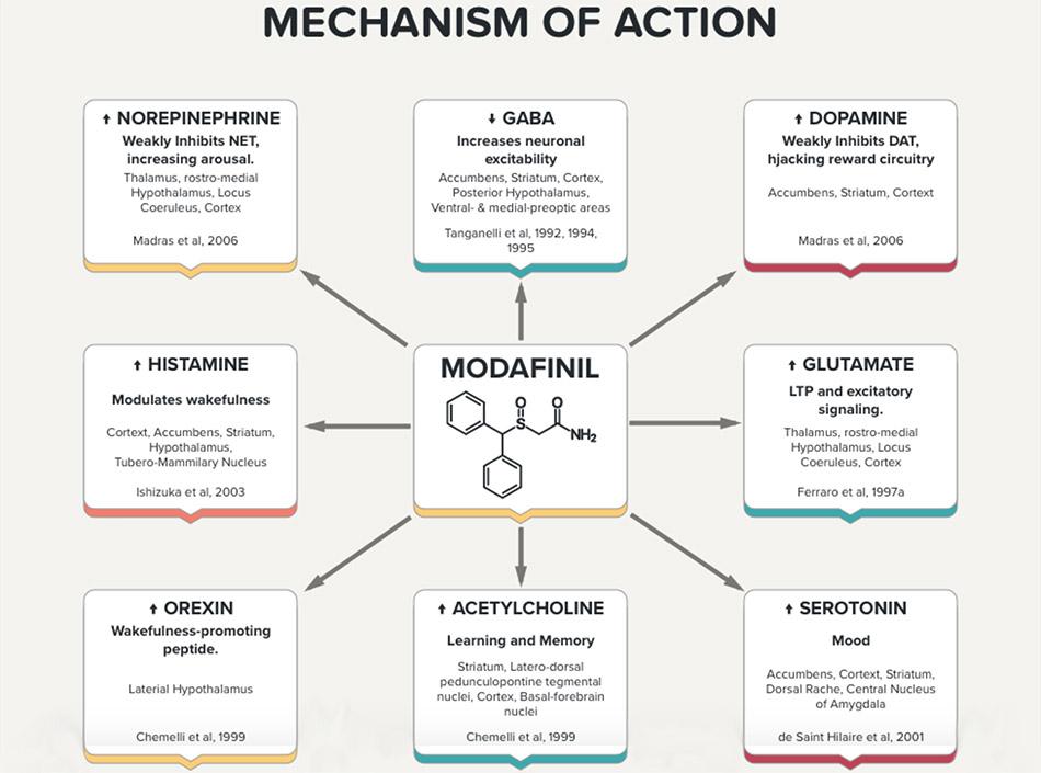 Modafinil Mechanism of Action Diagram