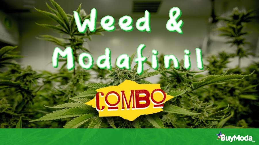 Weed & Modafinil Combo | Marijuana plants in the backdrop